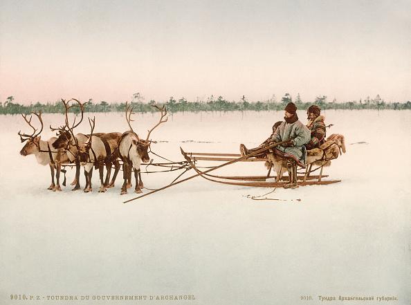 Reindeer Sledding「Reindeer Sleigh」:写真・画像(3)[壁紙.com]