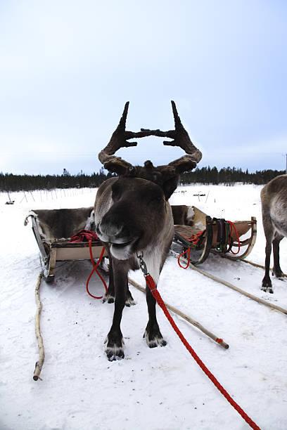 Reindeer Sleigh Ride:スマホ壁紙(壁紙.com)