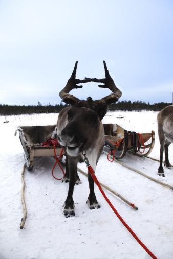 Sled「Reindeer Sleigh Ride」:スマホ壁紙(7)
