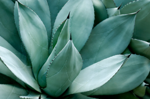Saturated Color「Agave leaves」:スマホ壁紙(11)