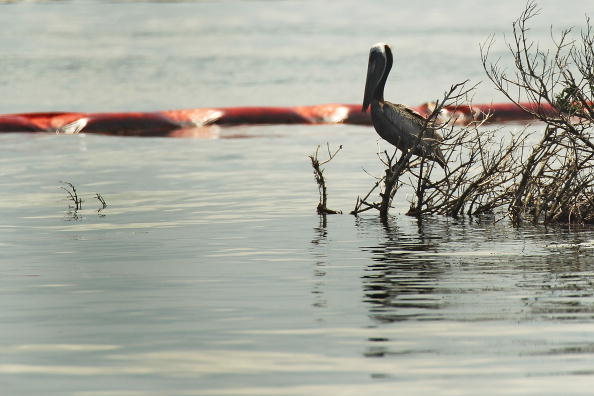 Slippery「Gulf Oil Spill Spreads, Damaging Economies, Nature, And Way Of Life」:写真・画像(9)[壁紙.com]