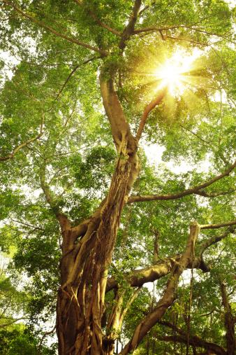 Durability「Sunbean Through an Old Green Foliage」:スマホ壁紙(12)