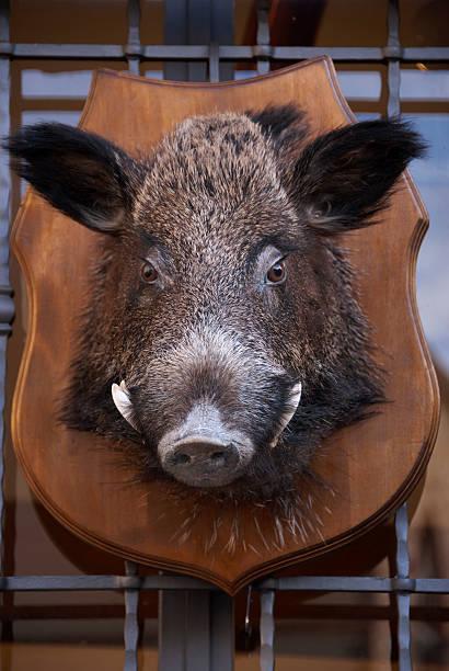 Mounted wild boar head at Italian restaurant:スマホ壁紙(壁紙.com)