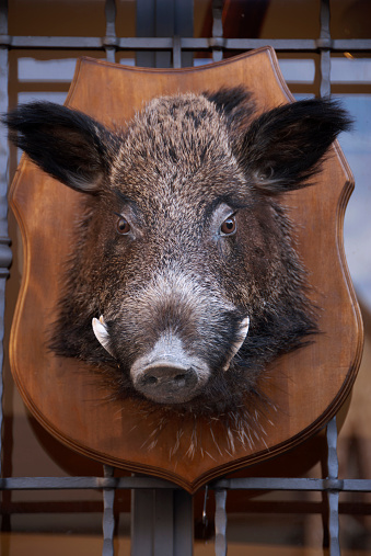 首都「Mounted wild boar head at Italian restaurant」:スマホ壁紙(6)
