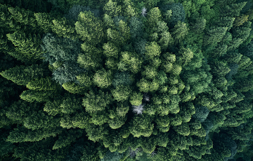Plant Process「Aerial top view of spring in forest in rural」:スマホ壁紙(12)