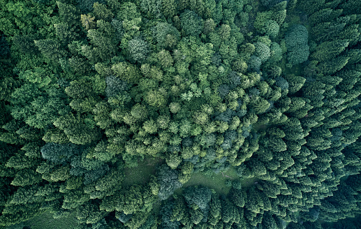 Pine Wood - Material「Aerial top view of spring in forest in rural」:スマホ壁紙(9)