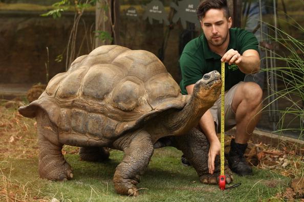 動物「London Zoo Staff Conduct Their Annual Weigh In For the Animals」:写真・画像(15)[壁紙.com]