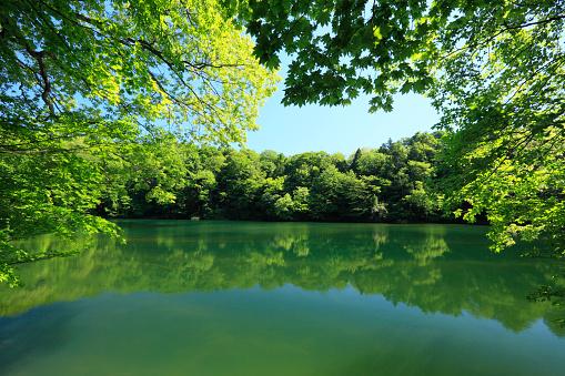 生い茂る「Juniko Lakes」:スマホ壁紙(14)