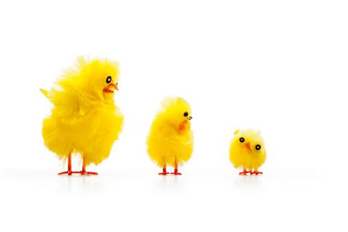 Easter「Three Baby Chicken」:スマホ壁紙(10)
