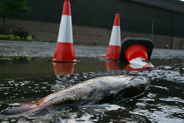 Fish「Flood Alerts Issued As Heavy Rain Hits UK」:写真・画像(18)[壁紙.com]