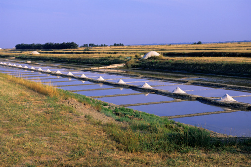 Nouvelle-Aquitaine「Salt march in Ile de re, Poitou Charentes, France」:スマホ壁紙(5)