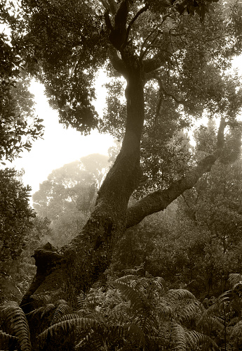 Sepia Toned「Tropical tree in the sunlight - Background - Jungle - Canary Island」:スマホ壁紙(5)