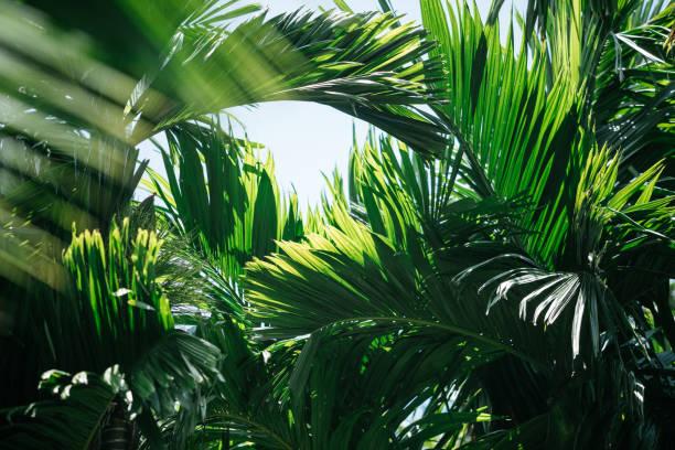 Tropical trees background:スマホ壁紙(壁紙.com)