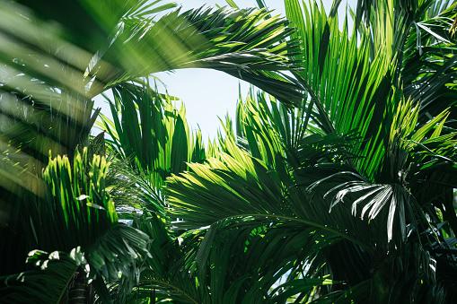 Tropical Tree「Tropical trees background」:スマホ壁紙(17)