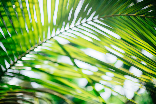 Sri Lanka「Tropical trees blurred background」:スマホ壁紙(5)