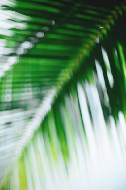 Tropical trees blurred background:スマホ壁紙(壁紙.com)