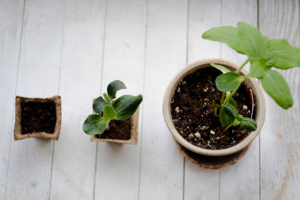 Three potted plants in order of growth:スマホ壁紙(壁紙.com)