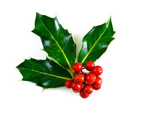 Christmas「Holly」:スマホ壁紙(0)