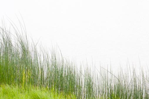 Timothy Grass「Tall Grass at Water's Edge」:スマホ壁紙(0)