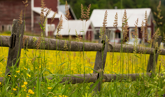 Stowe - Vermont「Tall grass growing along split rail fence and farm in background, Stowe, Vermont, USA」:スマホ壁紙(15)