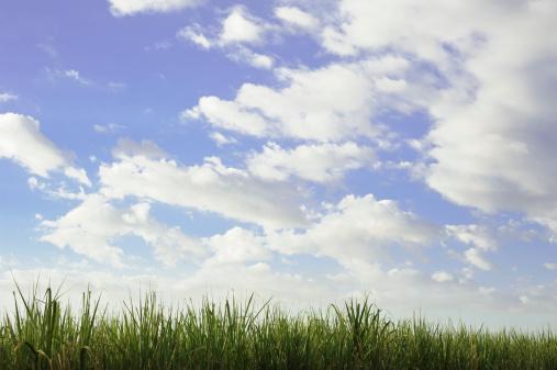 Central America「Tall grass under blue sky」:スマホ壁紙(12)