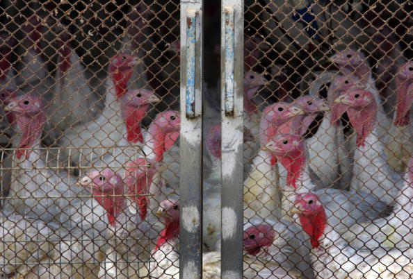 Effort「Israel Infected With Deadly Avian Flu」:写真・画像(0)[壁紙.com]