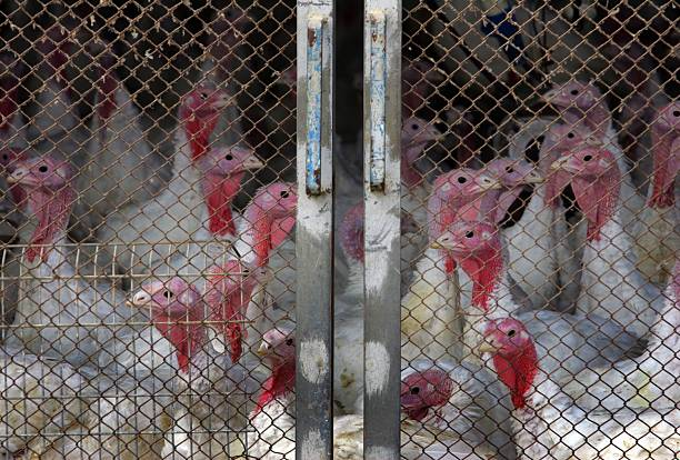 Israel Infected With Deadly Avian Flu:ニュース(壁紙.com)