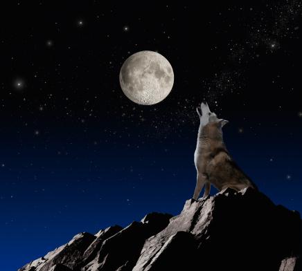 月「Wolf Howling At Moon」:スマホ壁紙(15)