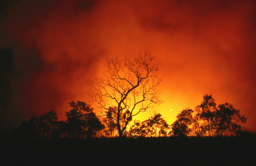 Queensland「Trees silhouetted by bushfire.」:スマホ壁紙(16)