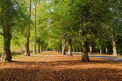Avenue「Lime tree avenue, Clumber park, Sherwood forest」:スマホ壁紙(3)