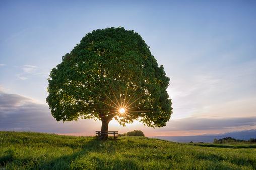Single Tree「Lime tree (tilia spec.) and park bench, sunbeams.」:スマホ壁紙(10)