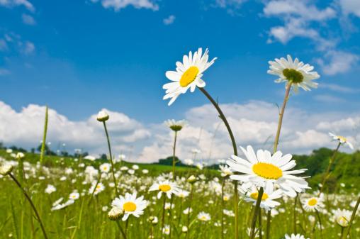 花畑「ワイルド春の花の緑の牧草地」:スマホ壁紙(15)
