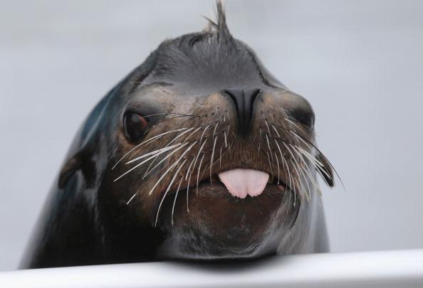 動物「New York Aquarium Prepares To Re-Open After Hurricane Sandy」:写真・画像(0)[壁紙.com]