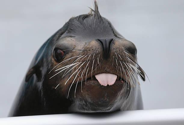 New York Aquarium Prepares To Re-Open After Hurricane Sandy:ニュース(壁紙.com)