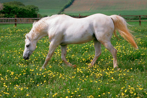 Stallion「Welsh Section B Pony Stallion」:スマホ壁紙(13)