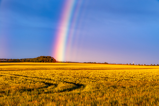 East Lothian「Rainbow arching over yellow countryside field at dusk」:スマホ壁紙(9)