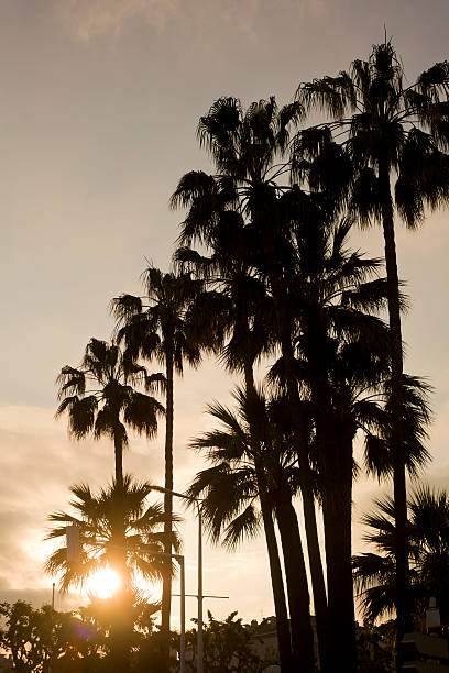 Summer Evening Palm Trees:スマホ壁紙(壁紙.com)