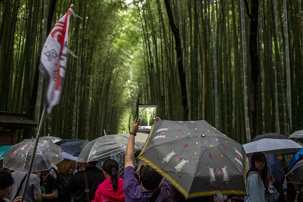 Grass Family「Tourism Boom In Kyoto」:写真・画像(2)[壁紙.com]