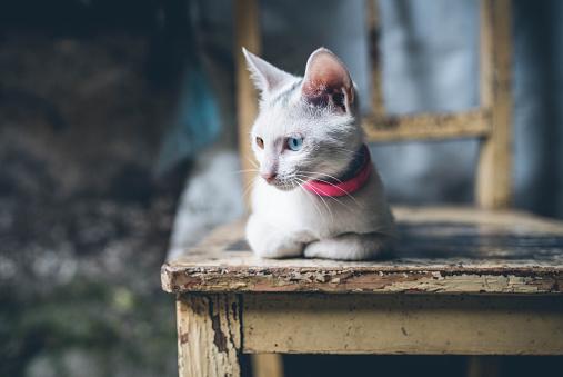 子猫「かわいい猫 」:スマホ壁紙(11)