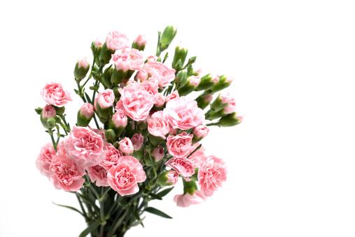 カーネーション「A bunch of pink carnations」:スマホ壁紙(19)