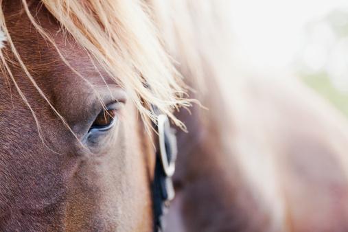 Animal Mane「Ireland, County Westmeath, Close-up of horse」:スマホ壁紙(16)