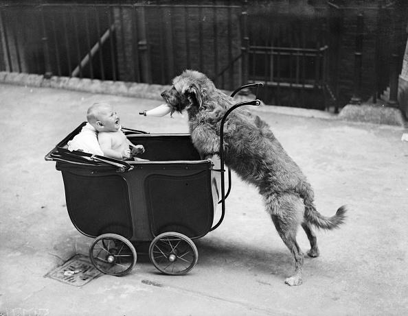動物「Canine Nurse」:写真・画像(18)[壁紙.com]