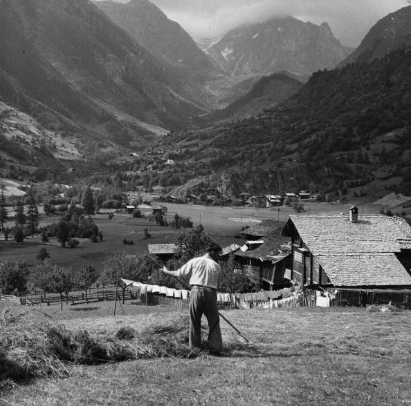 Land「Alpine Hay Harvest」:写真・画像(8)[壁紙.com]