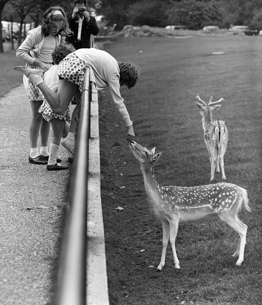 Feeding「Fallow Deer」:写真・画像(6)[壁紙.com]