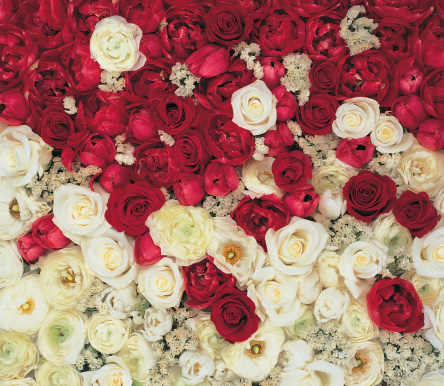 薔薇「Red and White Roses, Full Frame Taken Fom Directly From Above」:スマホ壁紙(4)