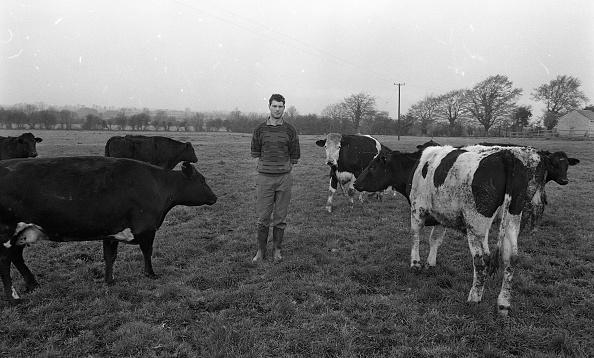動物「Liam Harnan Farmer 1990」:写真・画像(16)[壁紙.com]