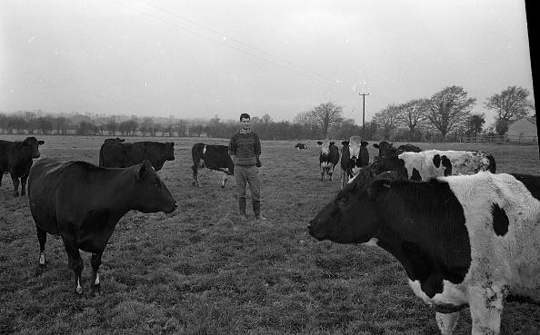 動物「Liam Harnan Farmer 1990」:写真・画像(18)[壁紙.com]