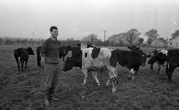 動物「Liam Harnan Farmer 1990」:写真・画像(17)[壁紙.com]