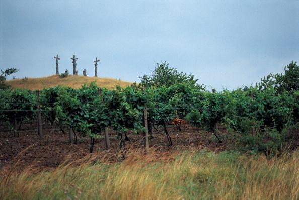 Winemaking「Landscape near Schrattenthal」:写真・画像(17)[壁紙.com]