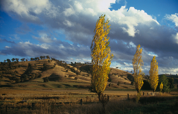 Lea Goodman「New South Wales」:写真・画像(12)[壁紙.com]